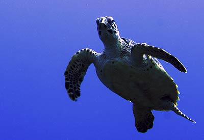 dom_turtle-2